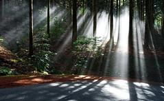 sunbeam II (blacky_hs) Tags: sunbeam wood wald madeira