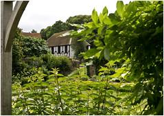 Through the foliage (Brian Legg) Tags: wpg oldleggey garden priorypark southendonsea twelve