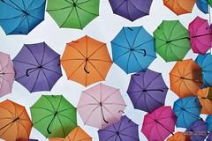 _MG_5967 (Marlon Cocqueel) Tags: lens parapluie umbrela