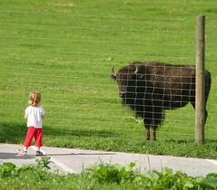 She said 💭.... what's your name? (carlesbaeza) Tags: love niños children animals naturaleza nature ngc buffalo bufalo