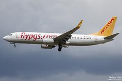 Pegasus Airlines --- Boeing 737-800 --- TC-AGP (Drinu C) Tags: adrianciliaphotography sony dsc rx10iii rx10 mk3 fra eddf plane aircraft aviation pegasusairlines boeing 737800 tcagp 737