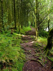 P7030683 (simonrwilkinson) Tags: dartmoor devon nationalpark uk venfordreservoir landscape trees path