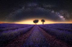 Via-Lactea-sobre-lavanda-H (rafaberlanga) Tags: olympus mzuiko 71428pro scene sky space natural night outdoor panorama spain star universe starlight brihuega colorful blue black astronomy background europe milkyway lavender guadalajara landscape nightscape