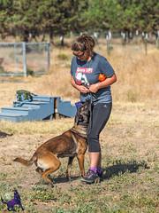 P7150200 (Songdog Studios) Tags: green dog neumond womensretreat 2017 k9 schutzhund ipo