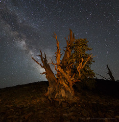 Bristlecone and Milky Way (Jeffrey Sullivan) Tags: ancient bristlecone pine inyo national forest county bishop california usa easternsierra astronomy astrophotography landscape nature milky way canon eos 6d photo copyright 2017 jeff sullivan photography july dark sky stars