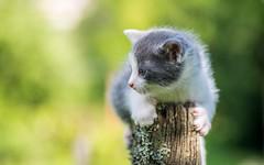 kittens (46) (Vlado Ferenčić) Tags: catsdogs cats animals animalplanet vladoferencic kitty kittens vladimirferencic zagorje hrvatska croatia nikond600 tamron9028macro closeup