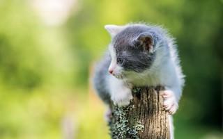 kittens (46)