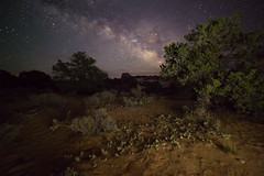 Prickly Under the Stars (Ken Krach Photography) Tags: canyonlandsnationalpark