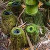 Last Bamboo Standing (ToDoe) Tags: bamboo bambus stumps stümpfe bambusstümpfe treestumps green grün tree baum bäume