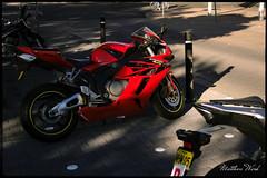 CRW_8377 (mattwardpix) Tags: red motorcycle motorbike laman street cooks hill newcastle nsw australia matthewward