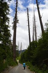 Into the Sunny Forest (Sotosoroto) Tags: dayhike hiking mtrainier mtrainiernationalpark westsideroad gobblersknob lakegeorge cascades mountains trees