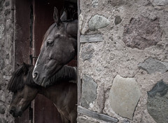 little and large (PenelopeEfstop) Tags: stone portrait barn horsefarm creemore ontario horses canada architecture farm rural horse outdoor animal