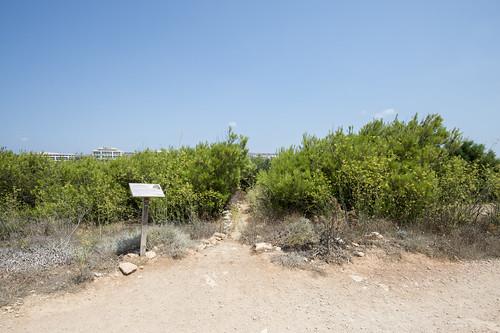 Gaia Peace Grove 1