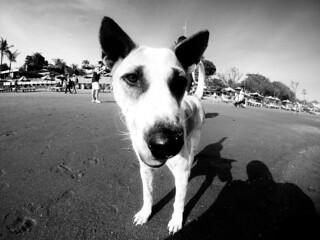 Beach Dog 2 - Seminyak