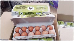 Watson Organic Farm eggs open box