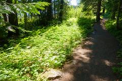 trillium lake family hike (dolanh) Tags: oregon mthoodwilderness hiking trilliumlake