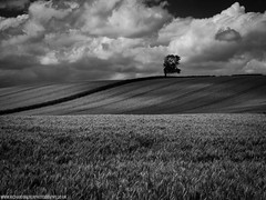 Windswept (Richard Walker Photography) Tags: clouds blackwhite landscape nature tree landscapephotography oxfordshire hill