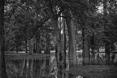 Here comes the water (JY_Photos) Tags: jyphotos indiana usa monochrome blackandwhite bw nikon nikond7500 affinityphoto tamron reflection outdoor sp2470mmf28divcusd water flooding trees leaves columbus