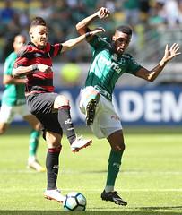 Palmeiras x Vitória (16/07/2017) (sepalmeiras) Tags: allianzparque campeonatobrasileiro palmeiras sep sériea vitória palmeirasxvitoria16072017 tchetche