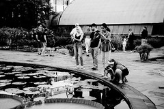 Longwood Gardens_003_01 (mujetdebois) Tags: ilfordpanf50 35mm analogphotography biancoenero blackandwhitephotography filmisnotdead filmlives filmphotography monochrome negroyblanco noirblanc schwarzundweis черноеибелое longwoodgardens canonelan100