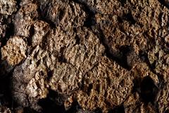 Liège - Cork - Corcho (the.flea) Tags: macromondays memberschoicetexture texture flea matériau