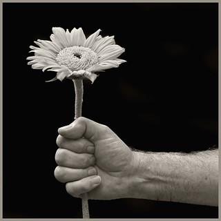 Hand #8 2017; Sunflower