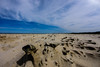 EUO © OCEANA Juan Cuetos 20170720_Northern Denmark _2696