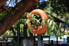 Reciclando (Wellington-stm) Tags: recycling citypark reciclagem jardim garden wheel pneu outdoors aoarlivre santarém pará brasil brazil