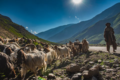 The Nomad (imtiazchaudhry) Tags: mountains animals graze summers goats sun flare clouds blue sky stones road travel life people portrait migrate