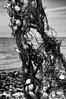 Suspension (Fabrice Denis Photography) Tags: seascapephotography france bwphotography blackandwhite charentemaritime baiedelaiguillon coastalphotography blackandwhitephotography coquillages esnandes nouvelleaquitaine algues ocean blackwhitephotos seascapes seascapephotos monochromephotography oceanphotography sea seascapephotographer monochrome fr noiretblanc