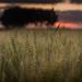 Panorama (© Jenco van Zalk) Tags: panorama grain wheat landscape outdoor agricultural farming rural countryside 51
