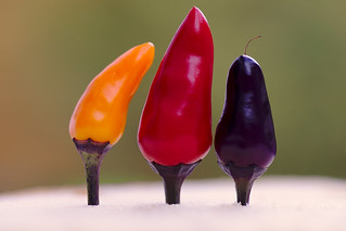 Three Hot Chili Peppers