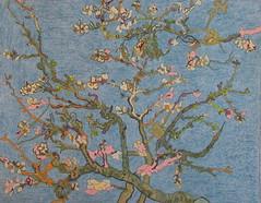 Amandiers en fleurs - St-Rémy-de-Provence - Van Gogh - 1890_0 (Luc II) Tags: vangogh amandiers strémydeprovence