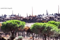 Matalscañas (Jezabel Galán) Tags: naturaleza paraje natural doñana arrasado fuego fire shadow sombras abstracto campo playa maneli huelva catastrofe hombre pinos protegido