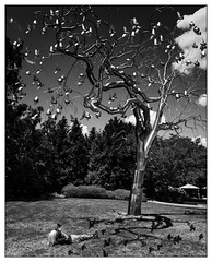 A Pursuit of Passion (GAPHIKER) Tags: washington washingtondc sculpture garden steel tree photographer surreal pigeons flight birds clouds sky shadows shadowsaretricky