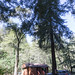Cabin 9 Among the Trees 2