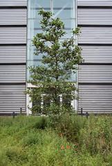 (Mark Greening) Tags: bristol buidling tree royalmailsortingoffice filton england unitedkingdom gb