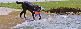 Dogs & Water Just Go Together