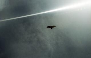 Condor-dos-andes, o voo mais deslumbrante que já vi
