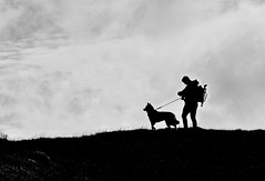 A Photographers Best Friend.. (Imagine8 Photography) Tags: imagine8photography nikon location husky mansbestfriend mountain hiking scenery corbett monochrome silhouette southernhighlands scotland scottish arrochar arrocharalps lochlong thecobbler benarthur summit