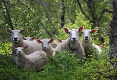 Family day (annazelei) Tags: natura natural nature children family together animal animals fauna sheep mammals eos canon outdoor woods green white portrait eyes face animalworld moment wood trees flickr scenery