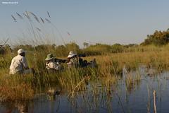 Taking Photos (naturalturn) Tags: group canoe mokoro justyna marsh wetland water moremi moremigamereserve okavangodelta okavango delta botswana image:rating=5 image:id=204657