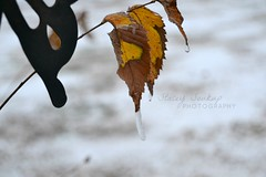 And it was perfect (ooh yeah) (purrplefoxx) Tags: photography photo stacey soukup staceysoukupphotography leaves leaf fall winter ice cold deviantart
