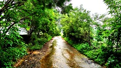 This Way #Flicker #Tree #Green #Road #plants #Myclick #comments #MotocaM (rockani451) Tags: comments flicker tree road green motocam plants myclick