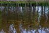 Refleksar (RineGC) Tags: telemark treungen abstrakt natur nature speiling vann vatn water