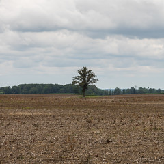 Project365 Day 196 Bonus. Lonely Tree.
