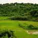 Rice field scenery