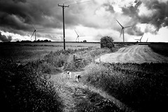 Powerful Yorkshire (Missy Jussy) Tags: yorkshire windfarm power pylon turbines mollie molliemunch rupert rupertbear pets lane countryside path fields farmland horizon sky clouds mono monochrome blackwhite bw blackandwhite canon canon5dmarkll 50mm ef50mmf18ll canon50mm fantastic50mm