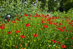 Summer borders (Adam Swaine) Tags: nymans nymanssussex sussex summer garden nationaltrust flowers flora english england colours beautiful britain sussexgardens swaine