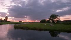Dutch polder sunset (M a u r i c e) Tags: sunlight sunset trees water teckop netherlands dutch holland sheep sky cloudy cloud nature landscape pond grassland reflections orange horizon summer
